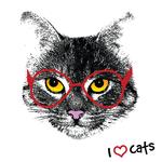 """Переводная тату """"I love cats"""""""