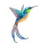 Пестрый колибри