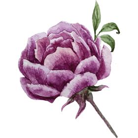 """Переводная тату """"Фиолетовый пион"""""""