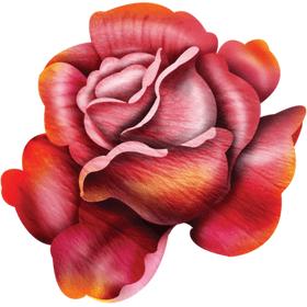 """Переводная татуировка """"Дикая роза"""""""