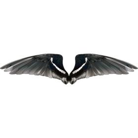 """Переводная татуировка для тела """"Крылья птицы"""""""