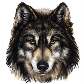 """Переводная татуировка """"Морда волка"""""""