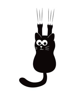 Сползающий котик